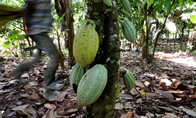 SuperSonic Radio - Proces împotriva exploatării copiilor de către mari producători de ciocolată